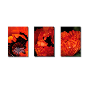 Pflanzenwelten | Triptychon Roter Mohn