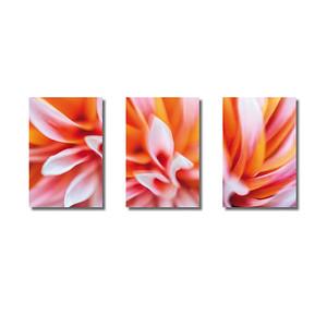Pflanzenwelten | Triptychon Dahlie IV