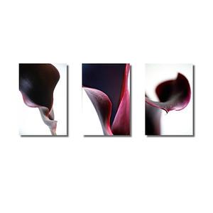 Pflanzenwelten | Triptychon Calla I