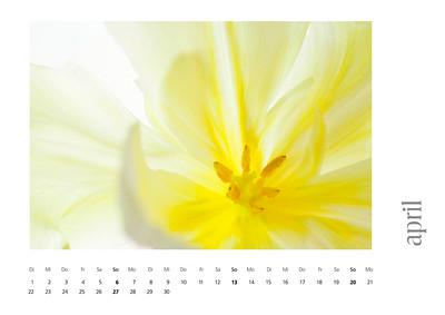 kalender2008-bild-neu-5