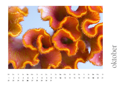 kalender2008-bild-neu-11