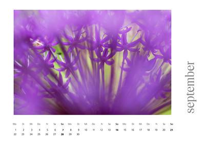 kalender2008-bild-neu-10