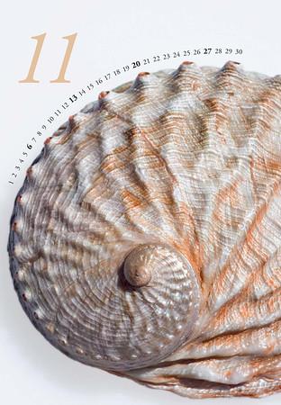 Shells-12