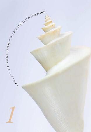 Shells-02