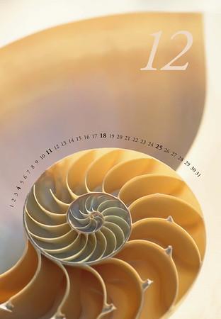 Shells-13