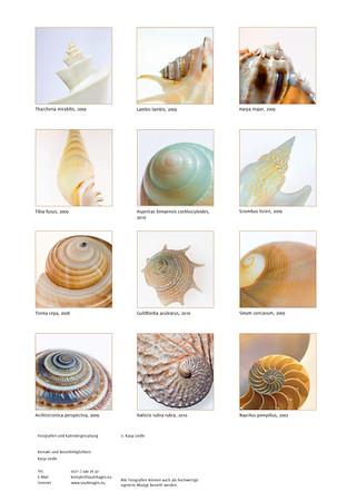 Shells-14