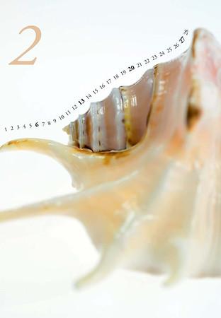 Shells-03