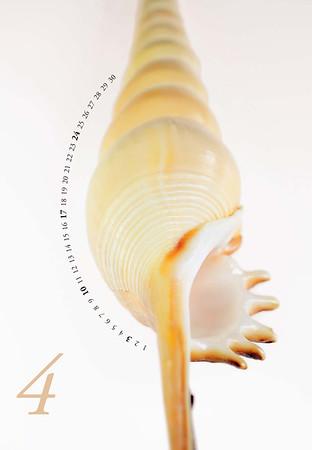 Shells-05