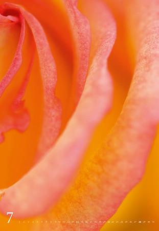 ColoursofNature2014-web-8