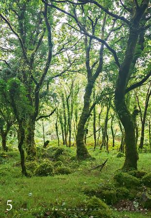 Irland-ganz-nah_2015-web-6