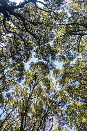 Waldpfad bei Makarora