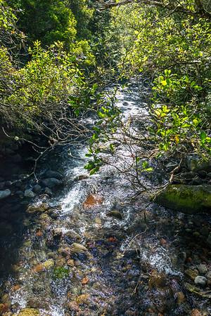 Mangawhero Forest Walk, Ohakune