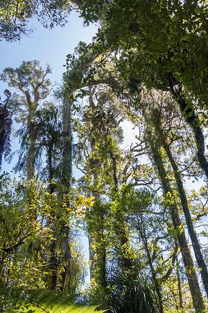 Ship Creek, Swamp Forest Walk, Sumpfwald