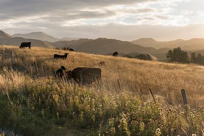 Landschaft an der Straße Richtung Ward, Marlborough