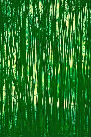 bambus0001