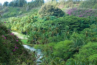 blick auf die üppige tropische Vegetation der Allerton Gardens während eines Regenschauers