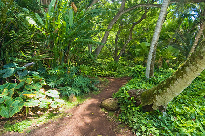Weg durch Palmen und tropische Grünpflanzen in den Allerton Gardens