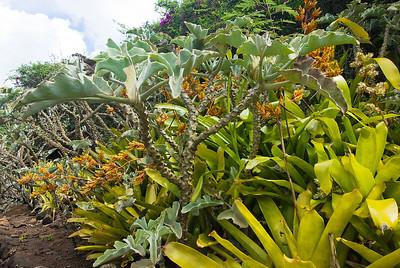 Bromelien und Kalanchoen