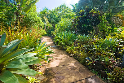 Palmen, Sukkulenten und Bromelien in den National Tropical Botanical Gardens, Kauai
