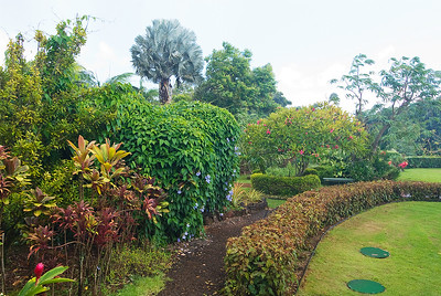 Palmen und verschiedene Büsche in den National Tropical Botanical Gardens, während eines Regengusses, Kaua'i