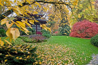 Pavillon mit herbstlichen bÄumen, Japanischer Garten Leverkusen