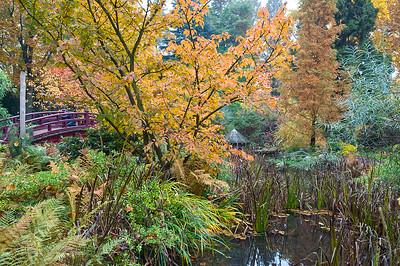 Brücke über einen Teich im herbstlichen Garten, Japanischer Garten Leverkusen