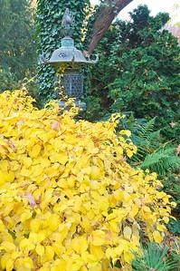 Leuchtend gelber Herbstbusch und japanische Laterne, Japanischer Garten Leverkusen