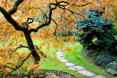 Weg aus Steinplatten und herbstlicher Fächerahorn, Japanischer Garten Leverkusen