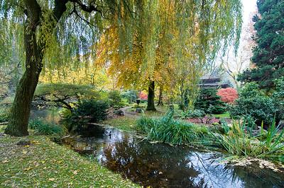 Weide am Teichufer, Japanischer Garten Leverkusen
