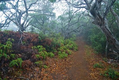 Wanderweg durch den Wald im Nebel am Awa'awapuhi Trail, Kauai