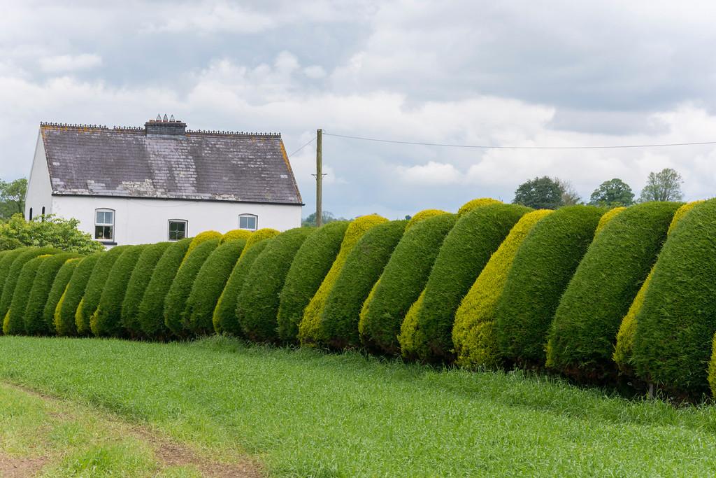 Heckenkunst bei Graiguenamanagh, Co. Kilkenny