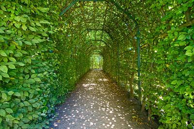 Buchenheckentunnel im Park von Schloss Rheinsberg