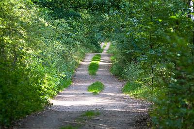 Waldweg druch dichten Laubwald