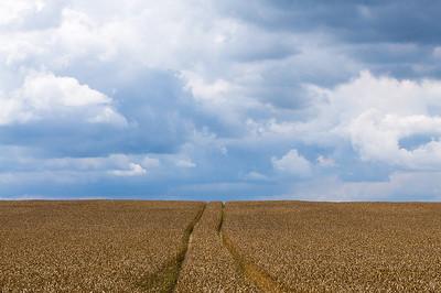 Traktorspuren durch ein Weizenfeld kurz vor der Ernte