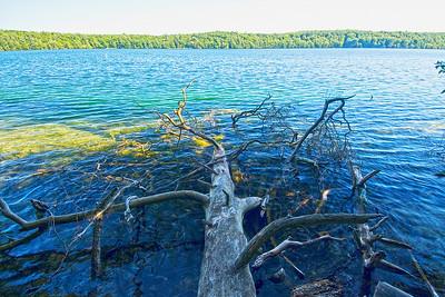 Abgestorbener Baum am Seeufer