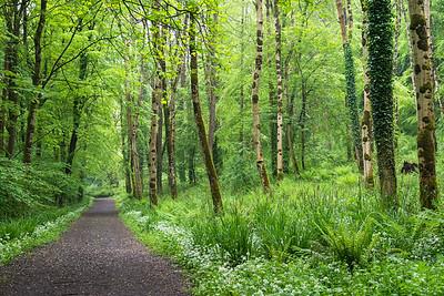 Wald bei Glenarm, Co. Antrim