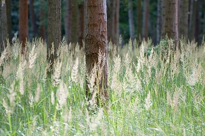 Lichter Wald mit Gras