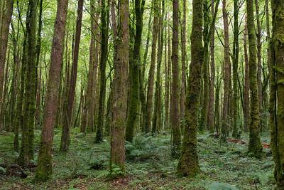 Wald bei Cong