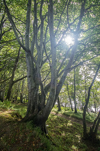Wald im Killarney National Park