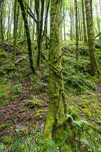 Weg am River Glenafallid in Glenshelane Woods