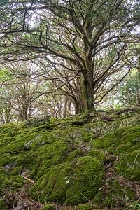 Muckross Peninsula