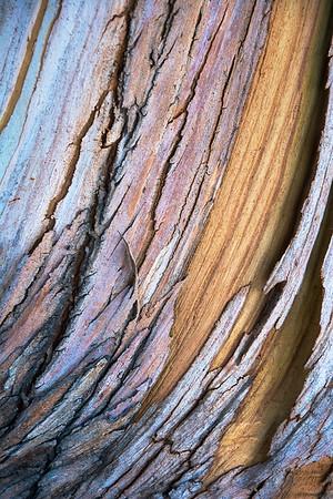Eukalyptusrinde