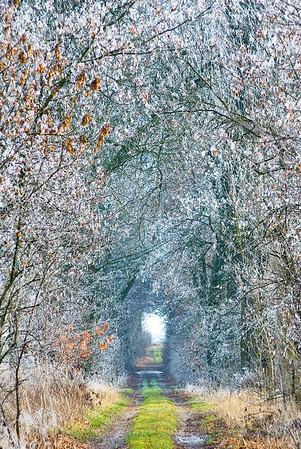 Winterliche Allee