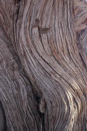 Stamm eines Wacholderbaums, Marokko