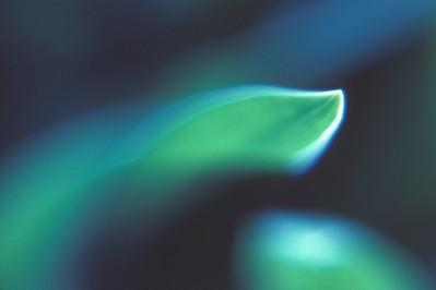 Lilienblatt