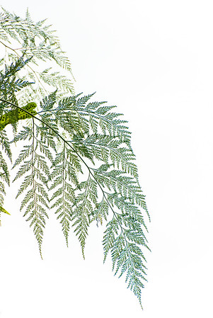 Farn an Palmenstamm