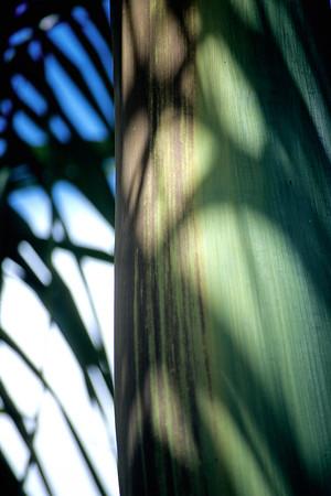 Blattschatten auf einem Palmenstamm