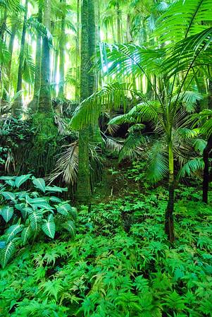 Palmen und Selaginella-Farn