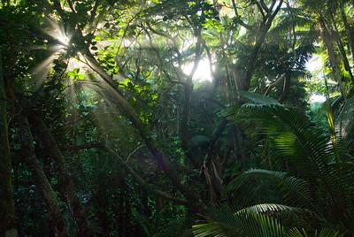 Die Sonne scheint durch das tropische Blätterdach, Hawaii Tropical Botanical Gardens bei Hilo