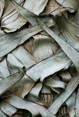 Trockene Blattschäfte einer Palme